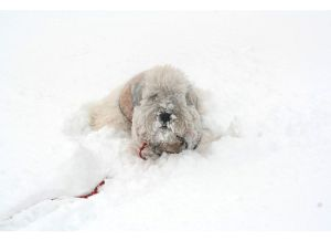 morag-in-snow-jan-2009
